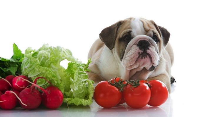 Vegetarische hond